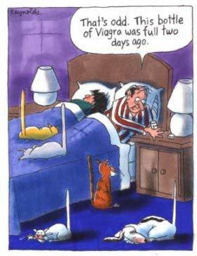 viagracats.jpg